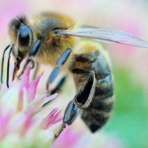 Nos abeilles se meurent. Soutien des apiculteurs dans leur convoi mortuaire de ruches d