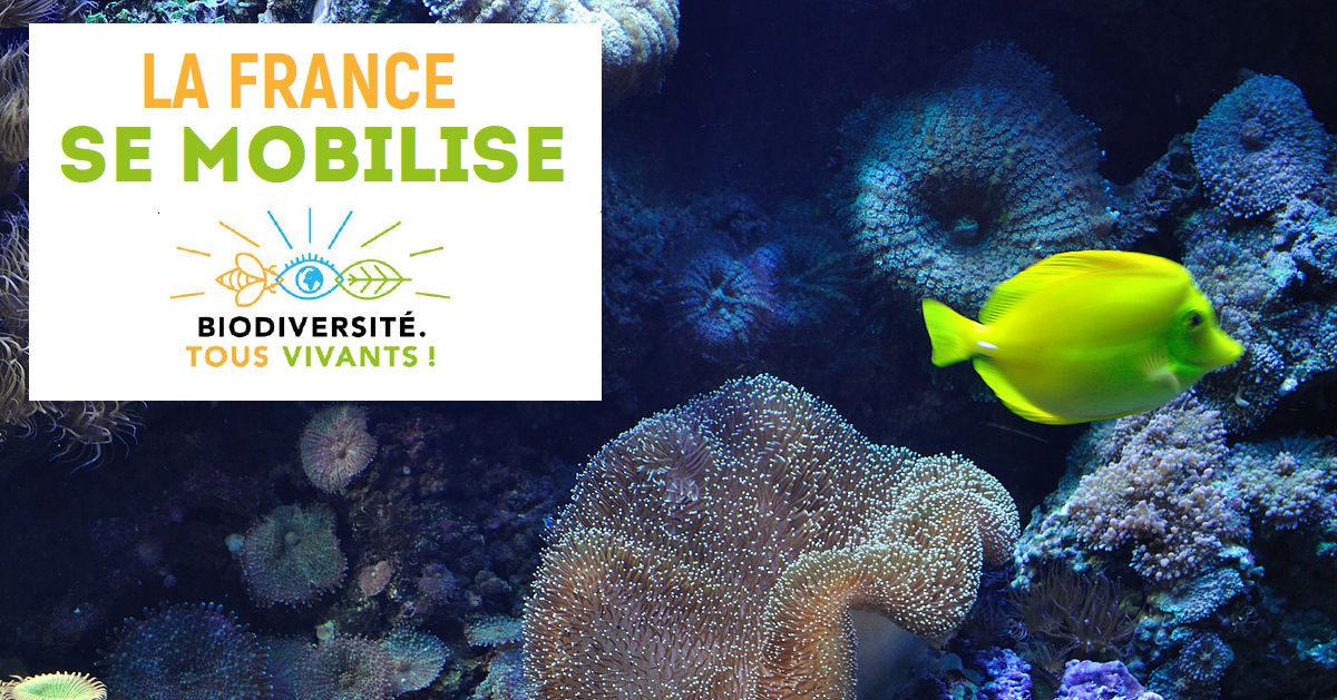 Sauvegarde de la biodiversité : Mobilisons-nous !