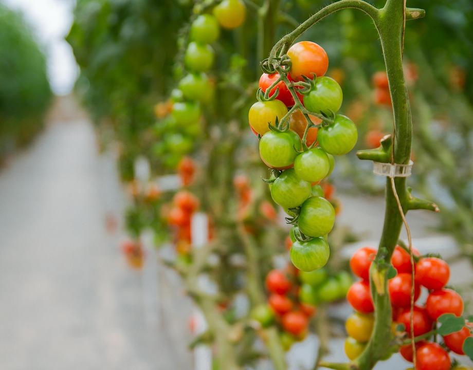 Tribune – Monsieur le Ministre de l'Agriculture et de l'Alimentation, défendons une agriculture biologique de qualité, préservons la transition agricole de notre pays !