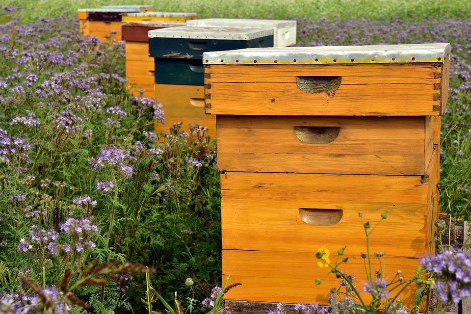 Projet de loi de finances : ma proposition pour aider les apiculteurs